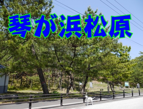 blog_0430_131929.jpg