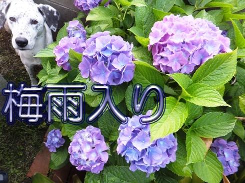 blog_0605_194746.jpg