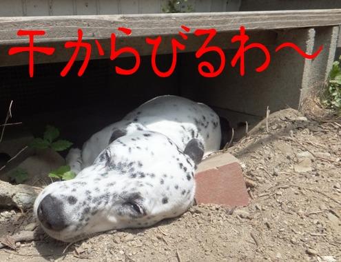 blog_0724_134811.jpg