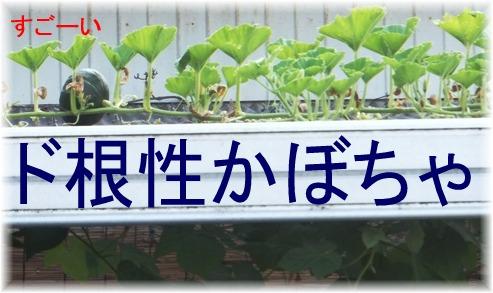 blog_0811_080107.jpg
