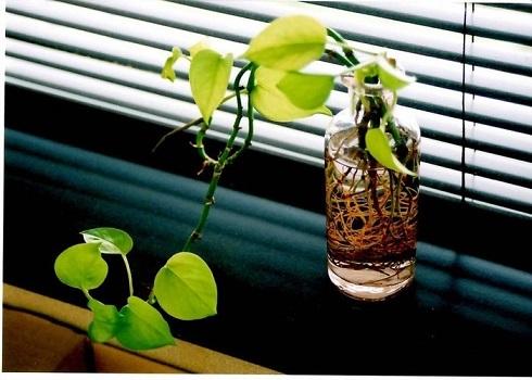 窓辺ミニ観葉植物
