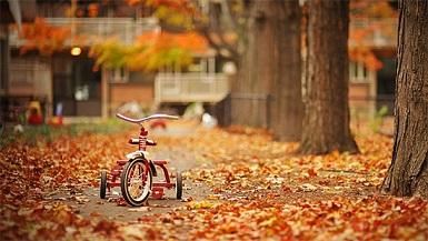 秋の画像2