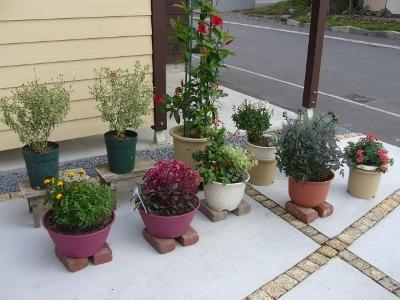 最後の鉢植え