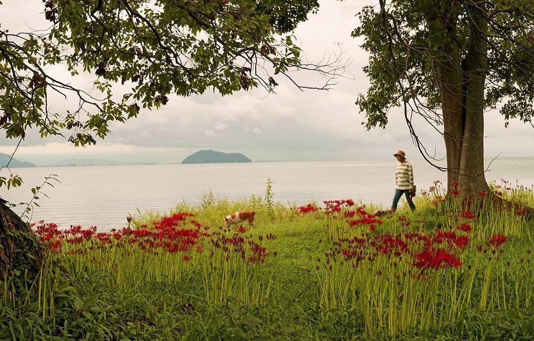 琵琶湖彼岸花6