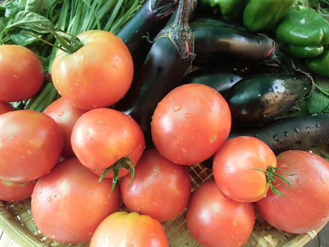 収穫トマトとナス