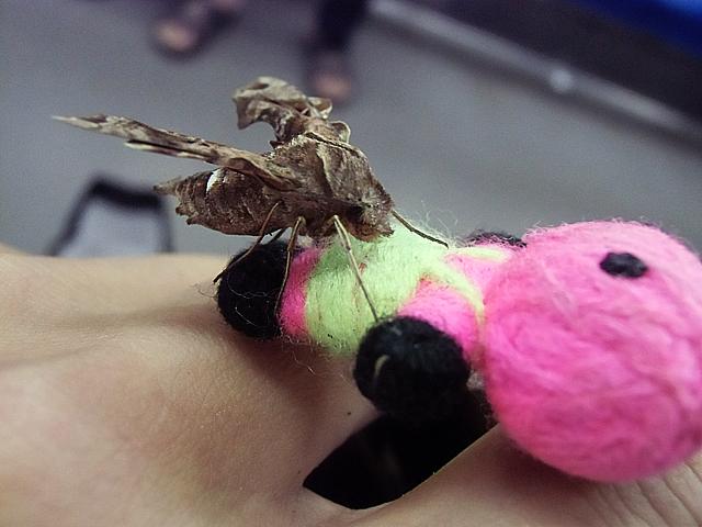 ポクポンについた蛾