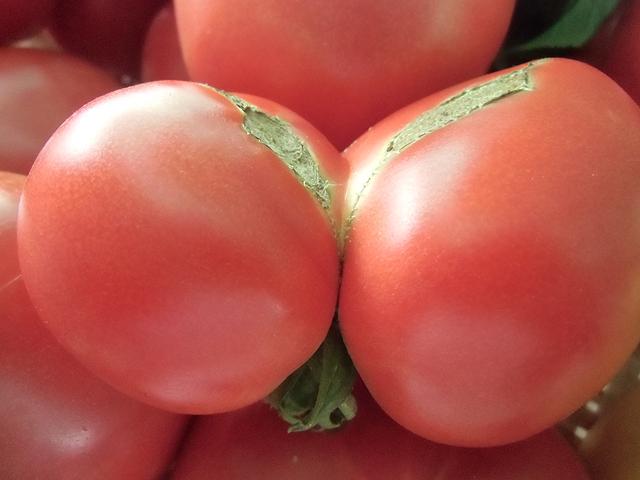 セクシートマト