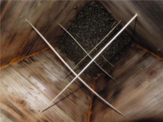 デボニアナム 誘引 分蜂 H280429