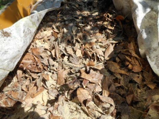 肥料作り1 H280525