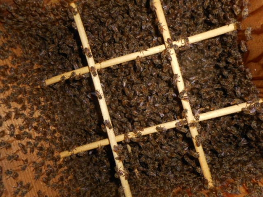 大群 日本蜜蜂 9月