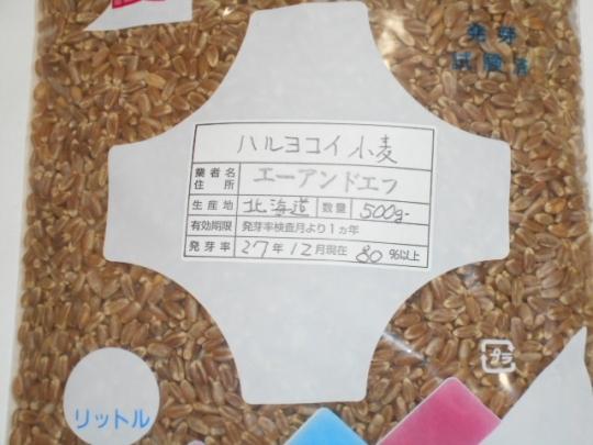 ハルヨコイ小麦 栽培 H2809