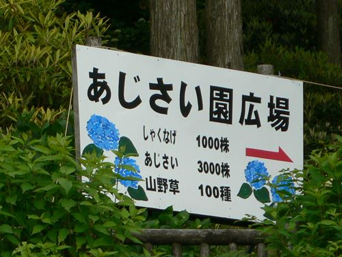 hanazonoajisai280627006_R.jpg
