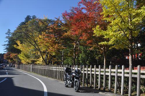 kouyakouyou1102002_R.jpg