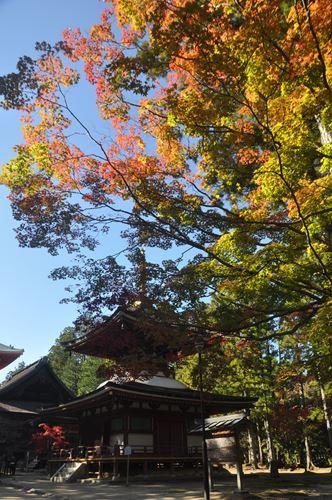 kouyakouyou1102006_R.jpg