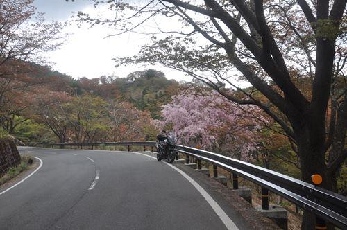 yosinoyama280413004_R.jpg