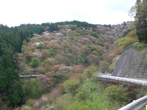 yosinoyama280413005_R.jpg