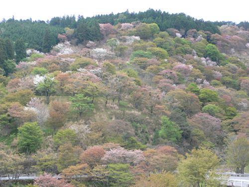 yosinoyama280413006_R.jpg