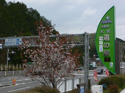 yosinoyama280413007_R.jpg