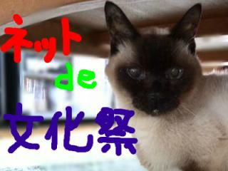 snap_himemarumaiko_2016103173245.jpg