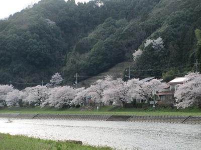 桜2016-6