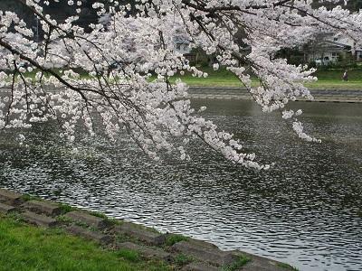 桜2016-7