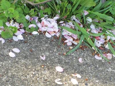 花びらいっぱい