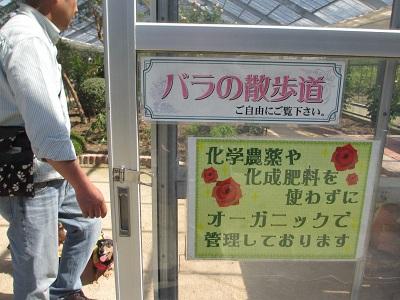 ハーブ園の中の薔薇コーナー