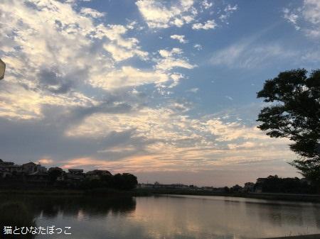 20160603_yuuhi.jpg