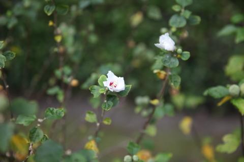 20161101littleflower1.jpg