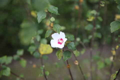 20161101littleflower2.jpg
