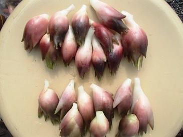 早稲田みょうがと一般種