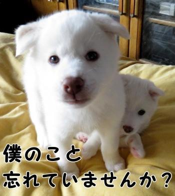 IMG_2291_convert_20160408211946.jpg