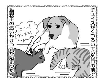 羊の国のラブラドール絵日記シニア!!「犬も食わんよ」1