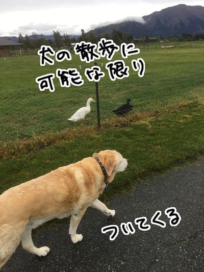 07112016_dog1.jpg