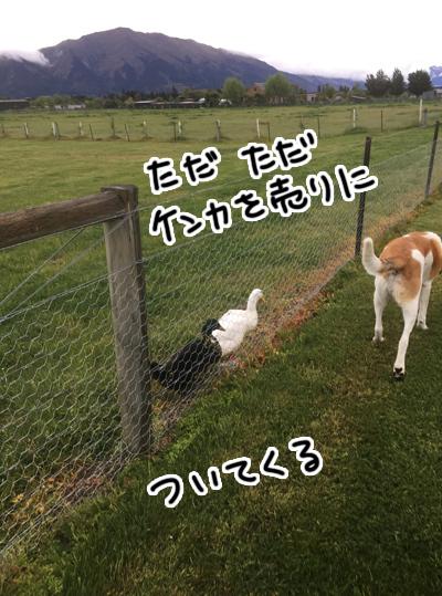 07112016_dog5.jpg
