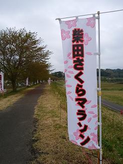 さくらマラソン1