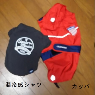 DOG DEPT GARDEN軽井沢