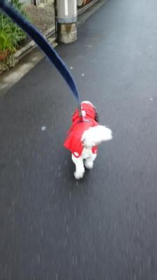 DOG DEPT のレインコート