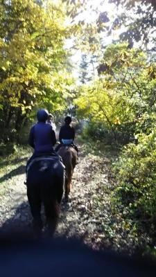 紅葉台木曽馬牧場