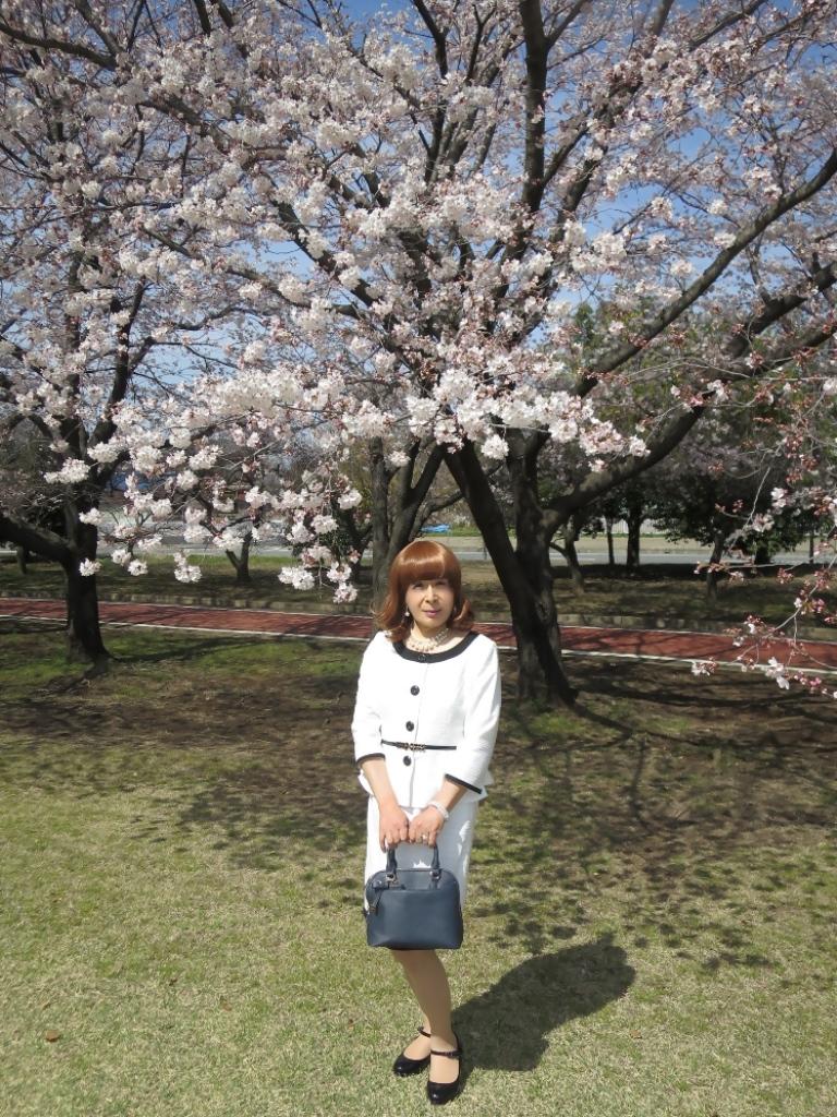 白スーツ春の公園桜A(1)