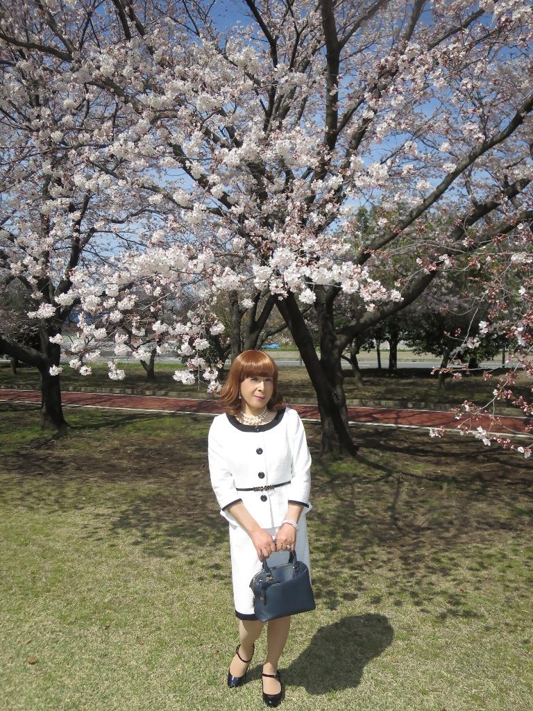 白スーツ春の公園桜A(2)