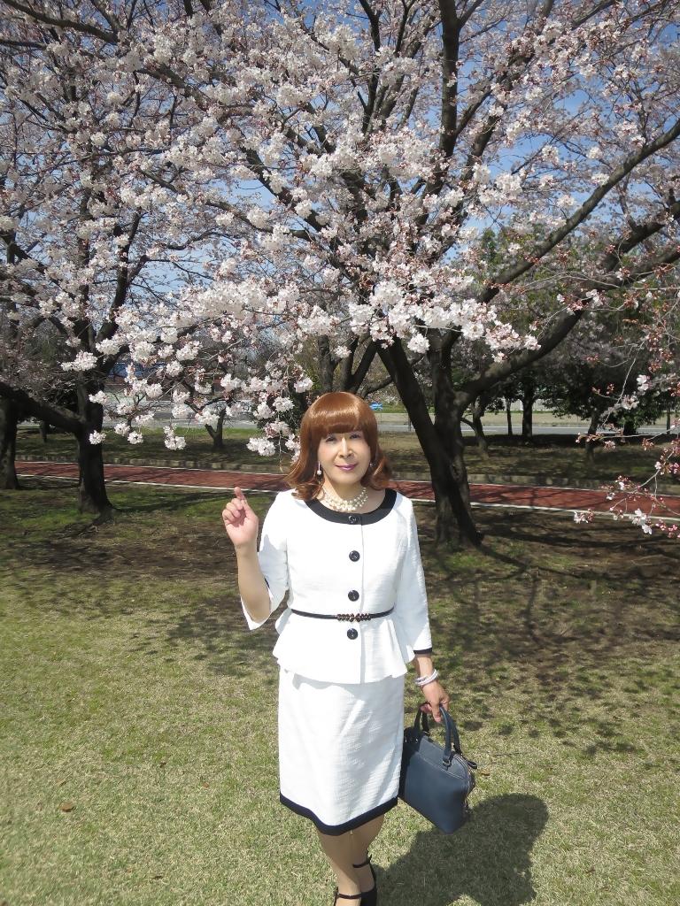 白スーツ春の公園桜A(4)