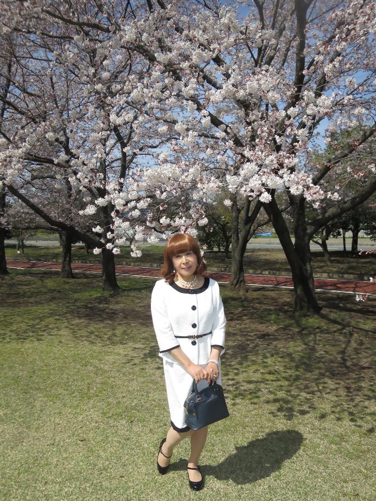 白スーツ春の公園桜A(5)