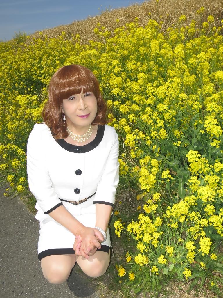 菜の花と白スーツB(6)