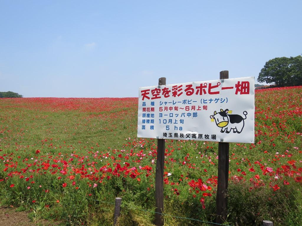 天空を彩るポピー畑(1)