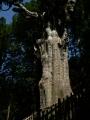 玉置神社 神代杉2