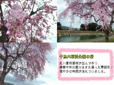 千鳥川桜提公園