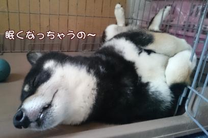 眠くなっちゃう~