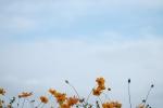 1001DSCF1441.jpg