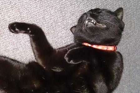 口開けて寝る黒猫